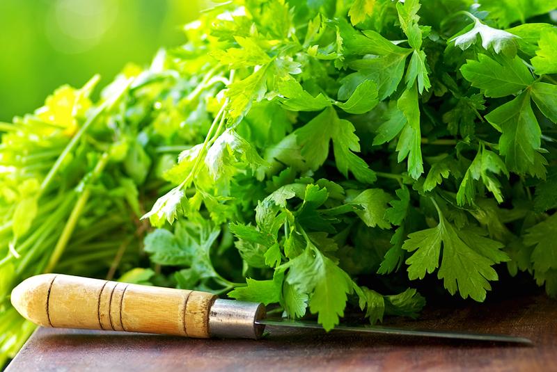 кинза зелень применение в кулинарии