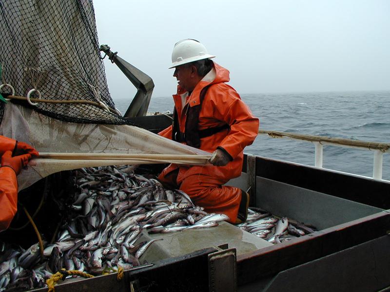 Итоги работы рыбохозяйственного комплекса Хабаровского края за 11 месяцев 2014 года